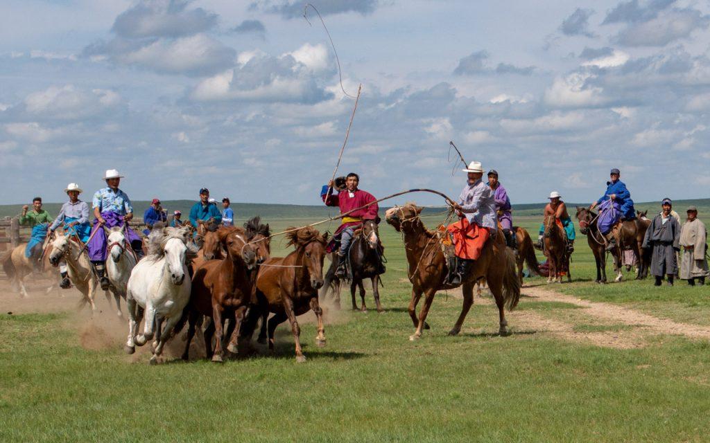 Lassoing wild horses