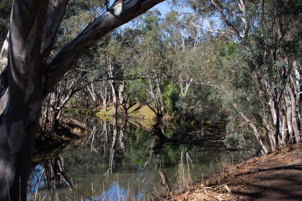 Campaspe River at Rochester, Victoria with Australian Bush reflected