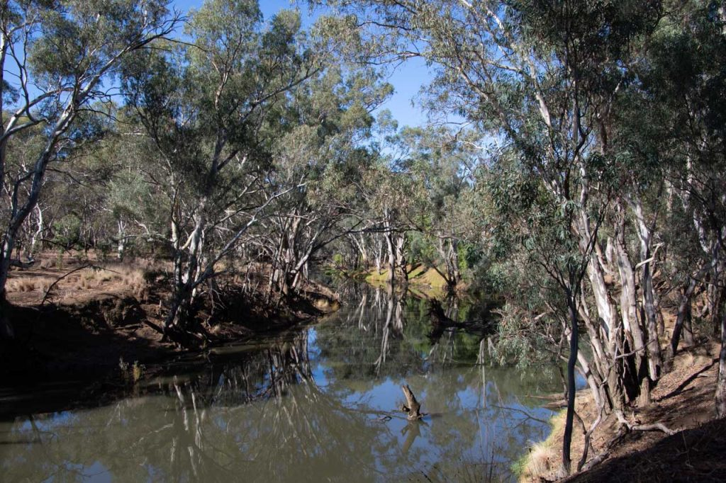 Australian bush reflected in the Campaspe River at Rochester, Victoria