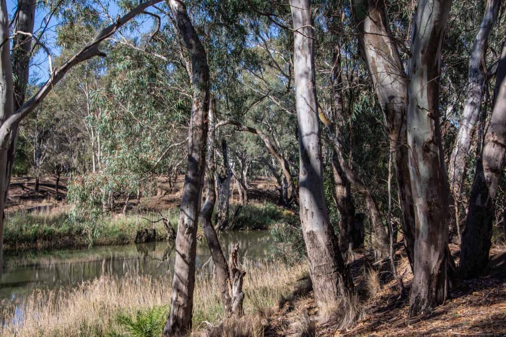 The Campaspe River in the Australian bush at Rochester, Victoria