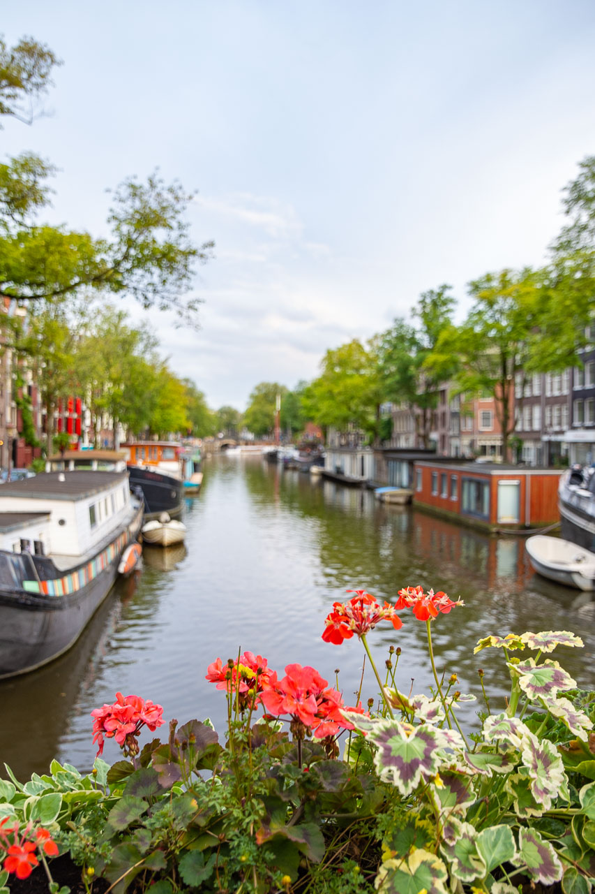 View of boats through flowers on a canal in Amsterdam