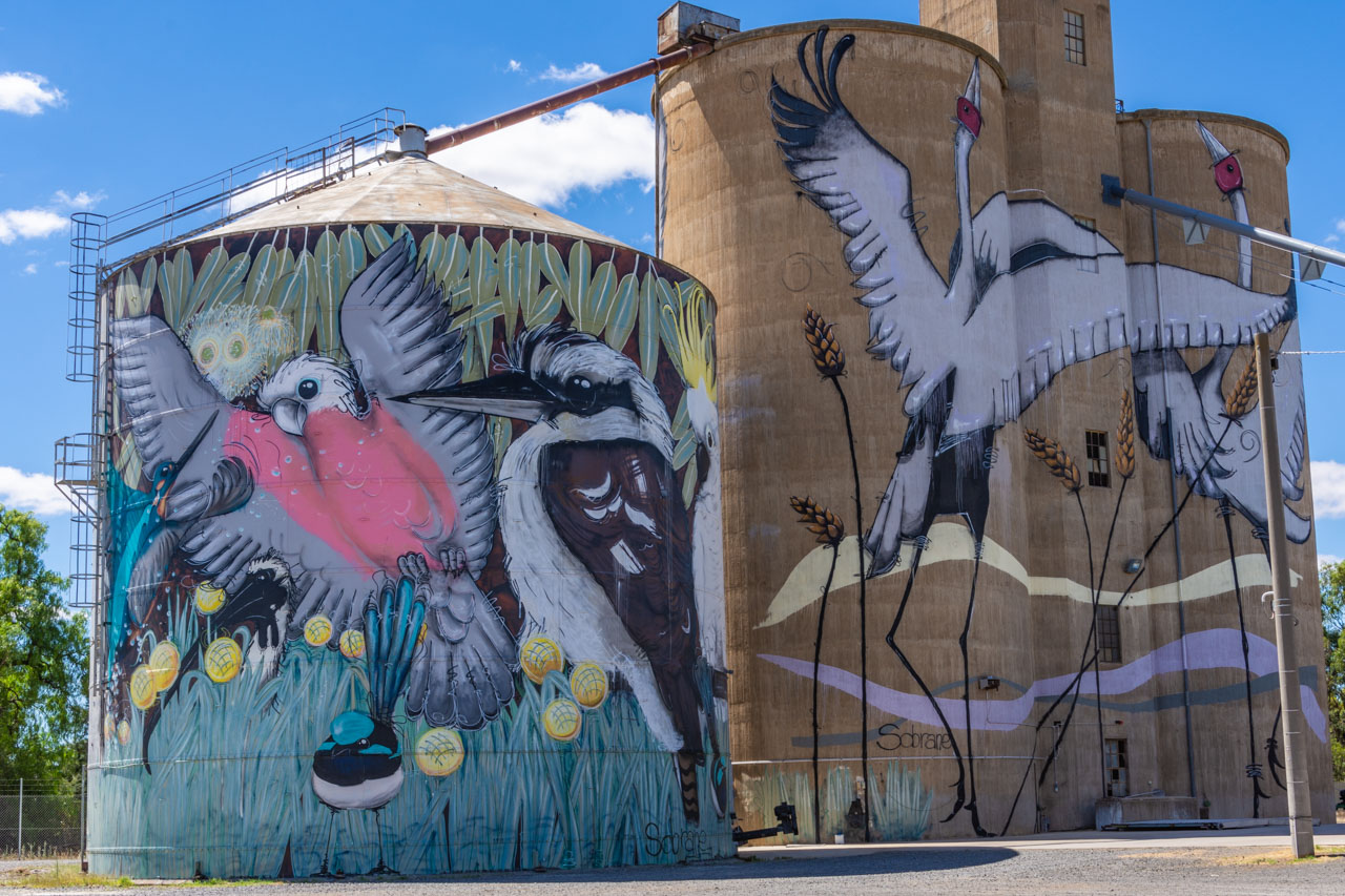 Colourful birds painted on outdoor buildings