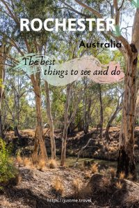 Gum trees along the banks of a river
