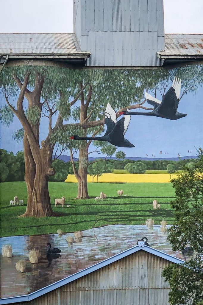 A painting on a silo of sheep in a paddock with black swans on the river and a black swan flying overhead