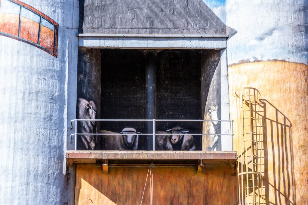 Painting on a grain silo of some sheep