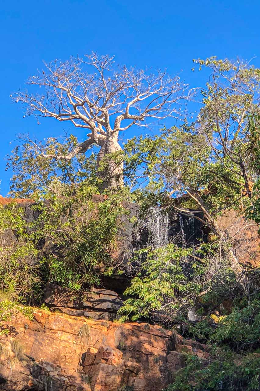 A tree with a fat trunk stands on top of a cliff above a waterfall