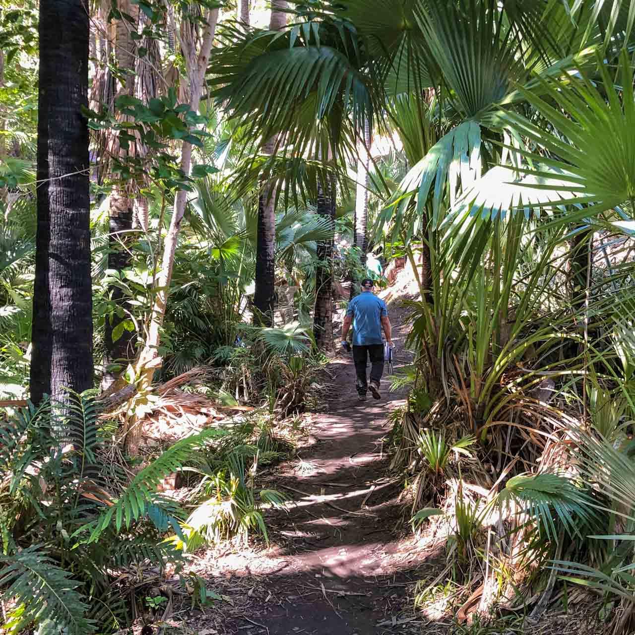 A man walking on a dirt path through palm trees