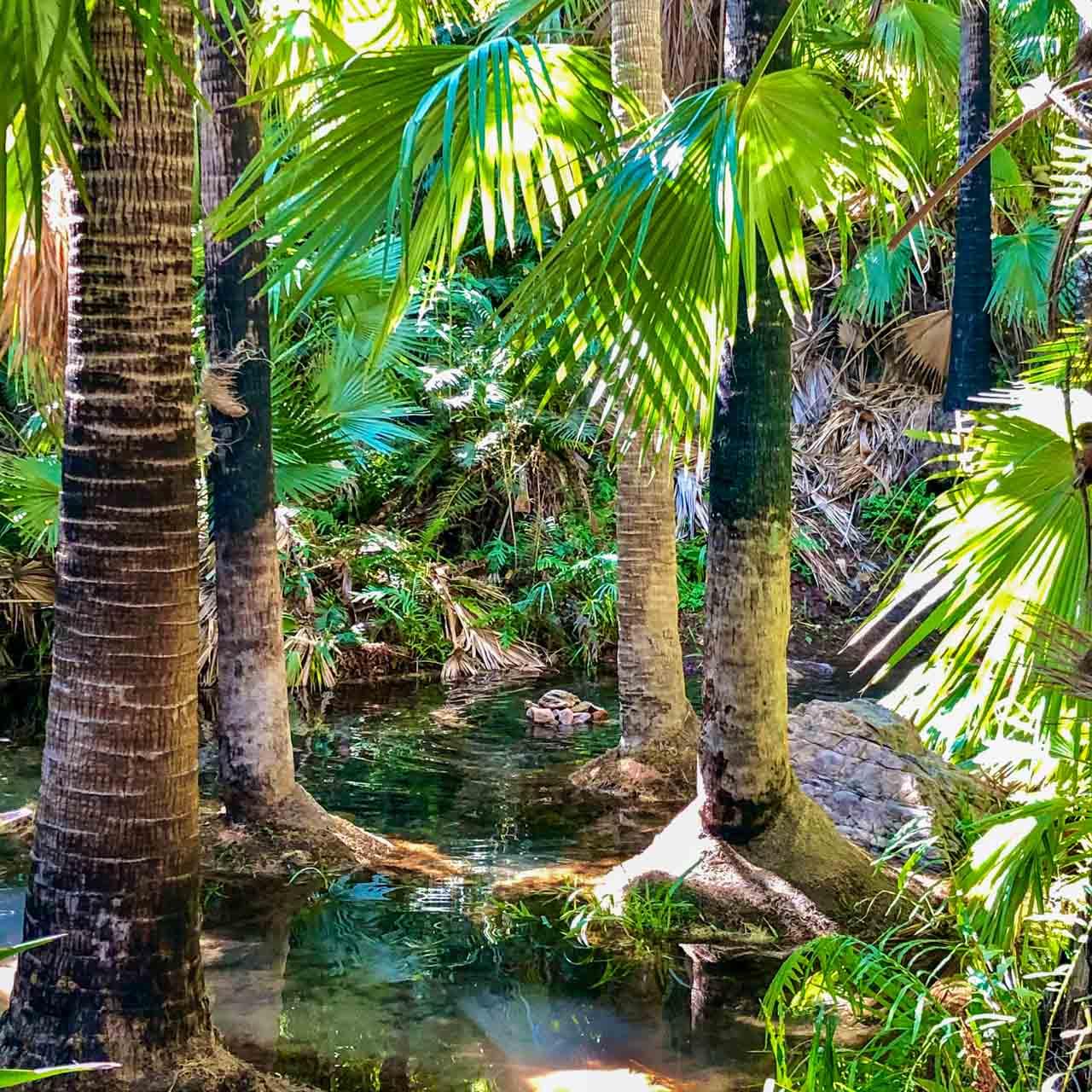 Pools of water between palm trees
