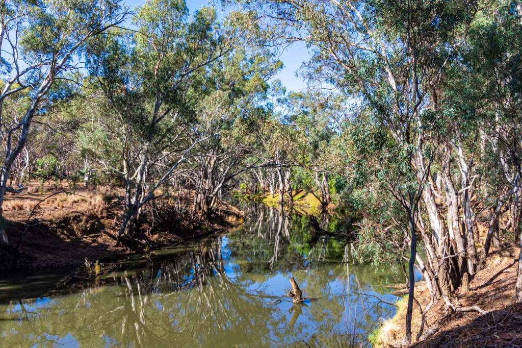 Australian gum trees are reflected in the waters of a river