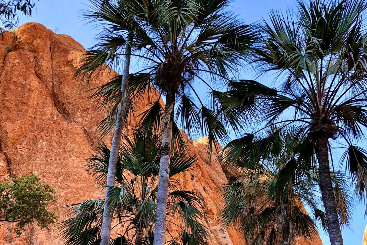 Palm trees in front of an orange cliff